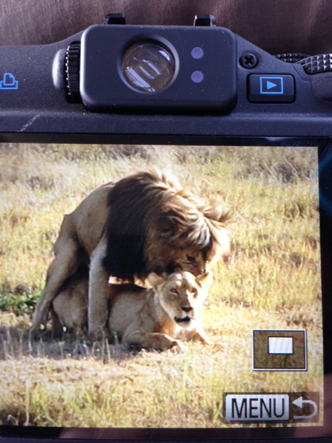 Oh look! Those lions are hugging. How adorable.