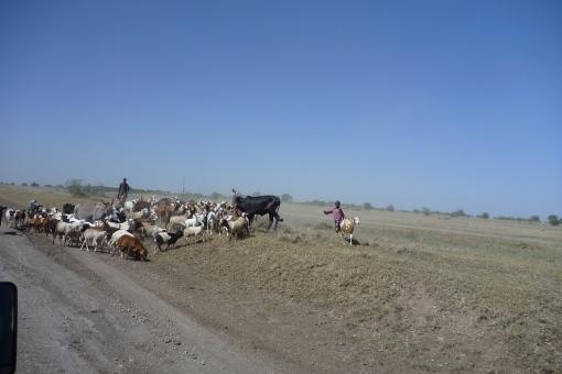 Goats, roads, & kids in Tanzania