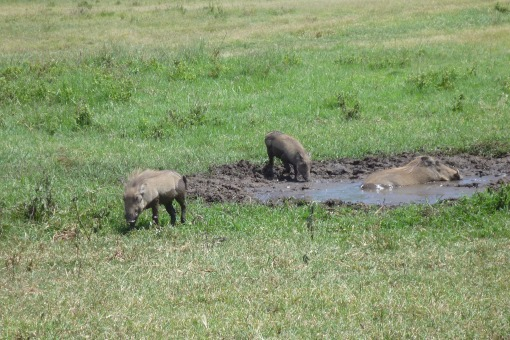 Mud time for the Warthogs