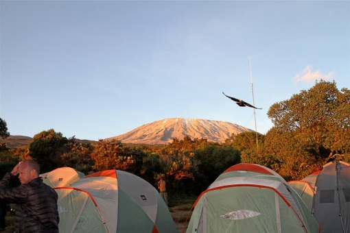 Camping below Kili